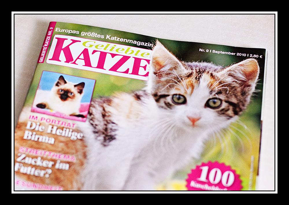 Andrea Gomoll Veröffentlichung Katze Tierfotos